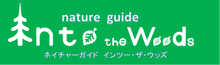 nature guide Into the Woods   ネイチャーガイド インツー・ザ・ウッズ